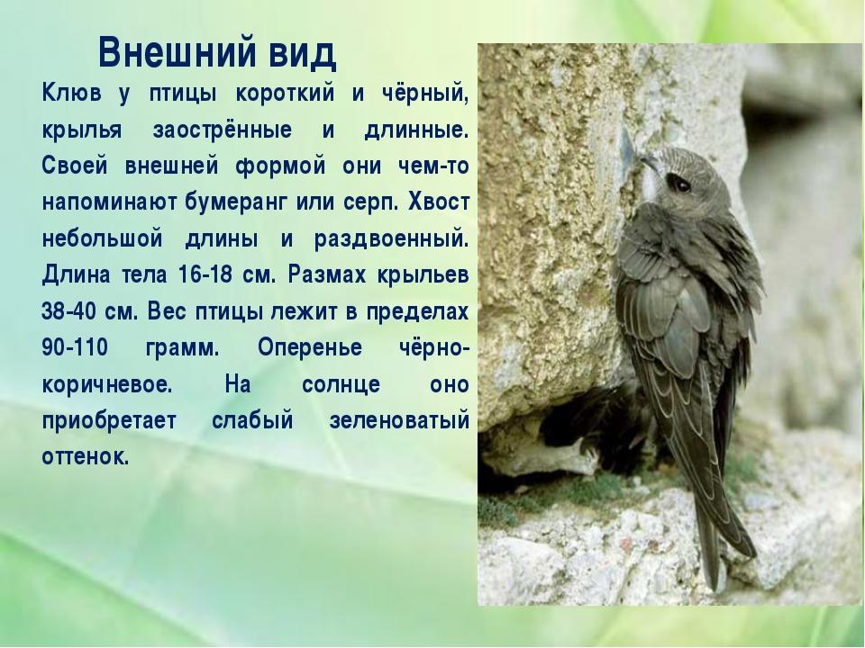 Внешний вид Клюв у птицы короткий и чёрный, крылья заострённые и длинные. Св...