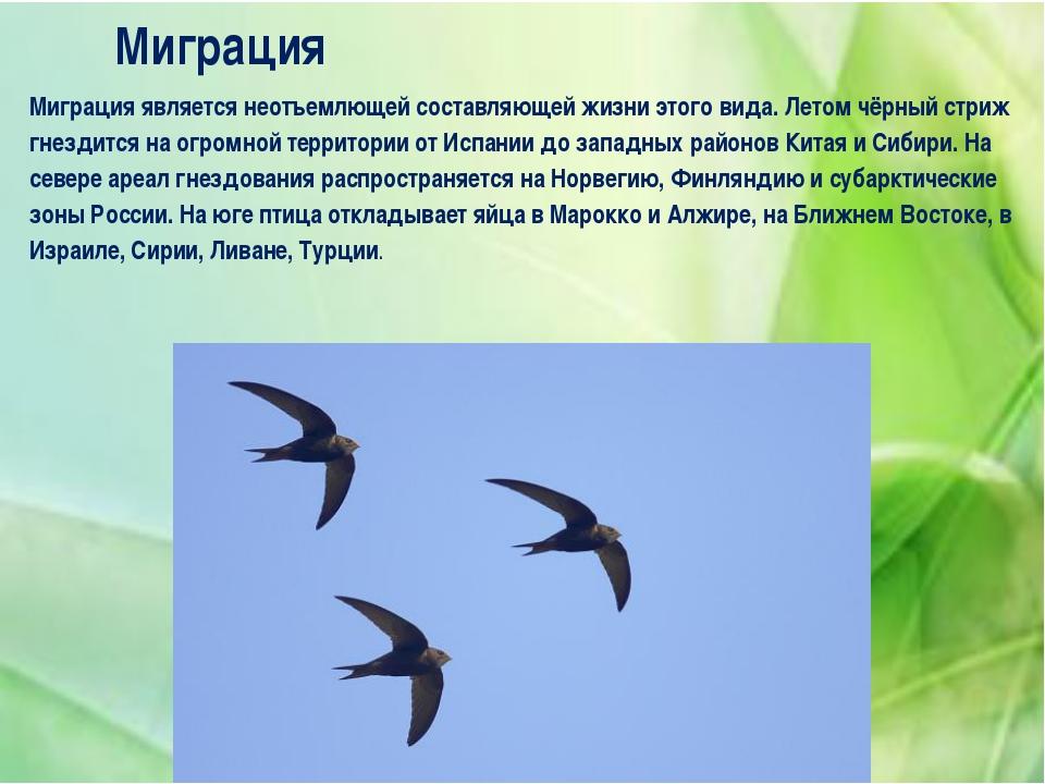 Миграция Миграция является неотъемлющей составляющей жизни этого вида. Летом...