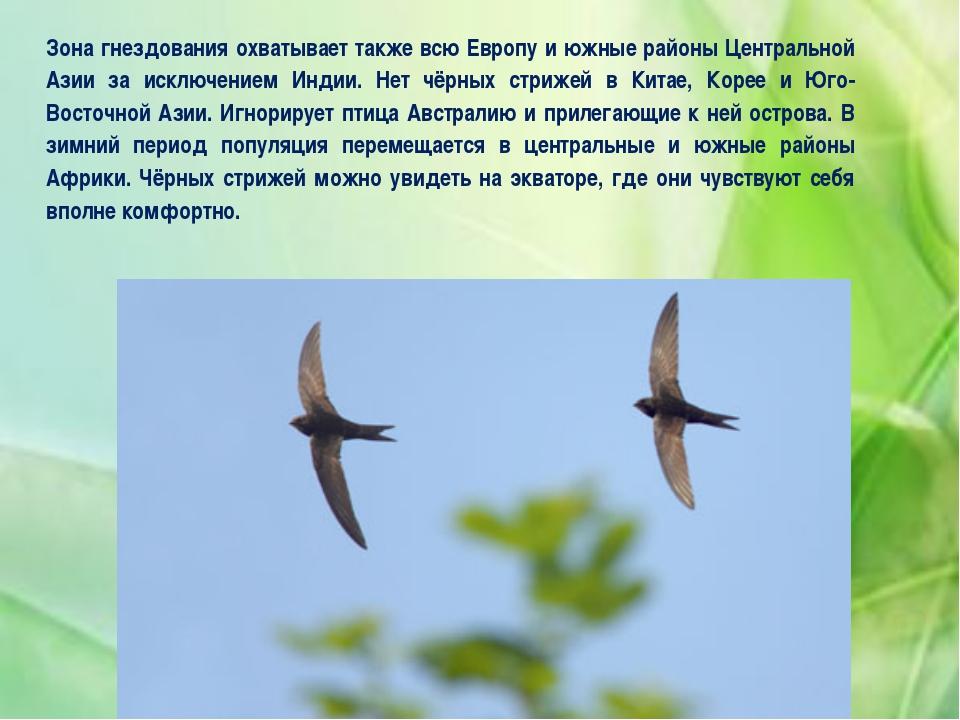 Зона гнездования охватывает также всю Европу и южные районы Центральной Азии...