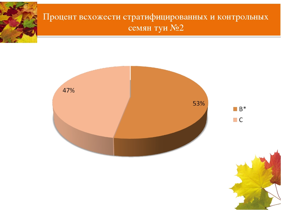 Процент всхожести стратифицированных и контрольных семян туи №2