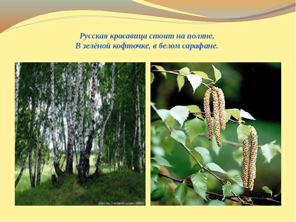 Русская красавица стоит на поляне,  В зелёной кофточке, в белом сарафане.