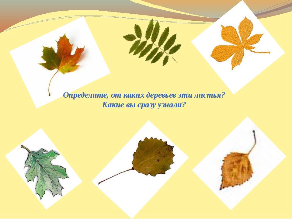 Определите, от каких деревьев эти листья? Какие вы сразу узнали?
