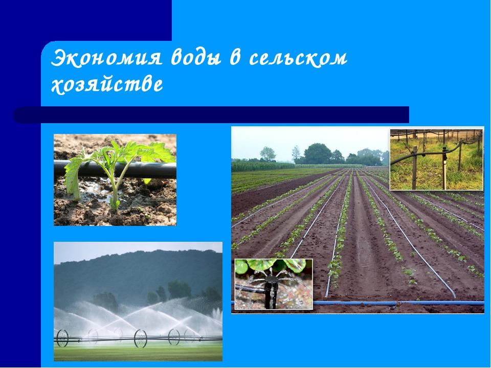 Экономия воды в сельском хозяйстве