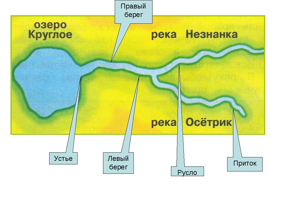 Приток Русло Устье Левый берег Правый берег