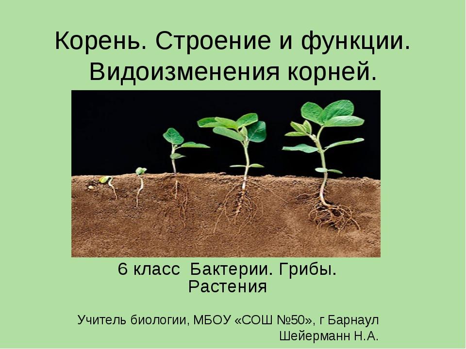 Корень. Строение и функции. Видоизменения корней. 6 класс Бактерии. Грибы. Ра...