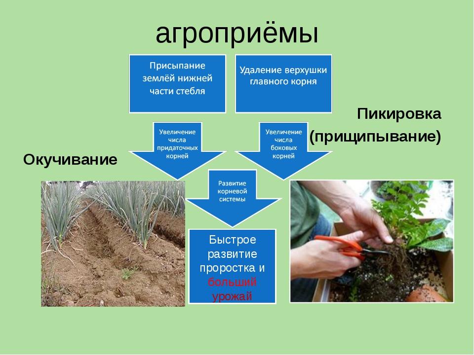 агроприёмы Окучивание Пикировка (прищипывание)