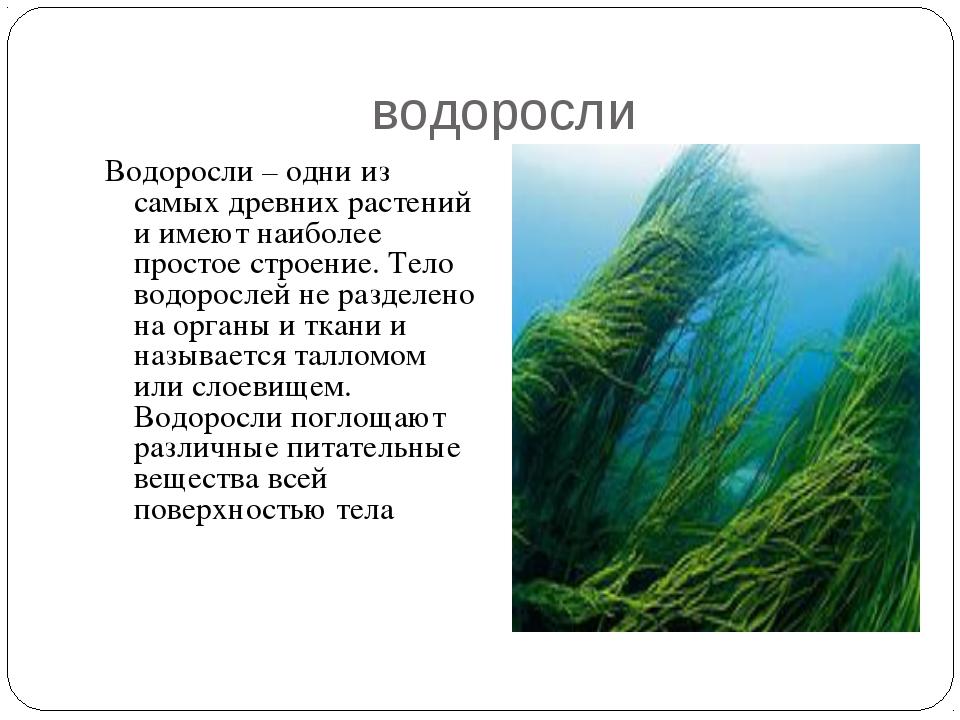 водоросли Водоросли – одни из самых древних растений и имеют наиболее простое...