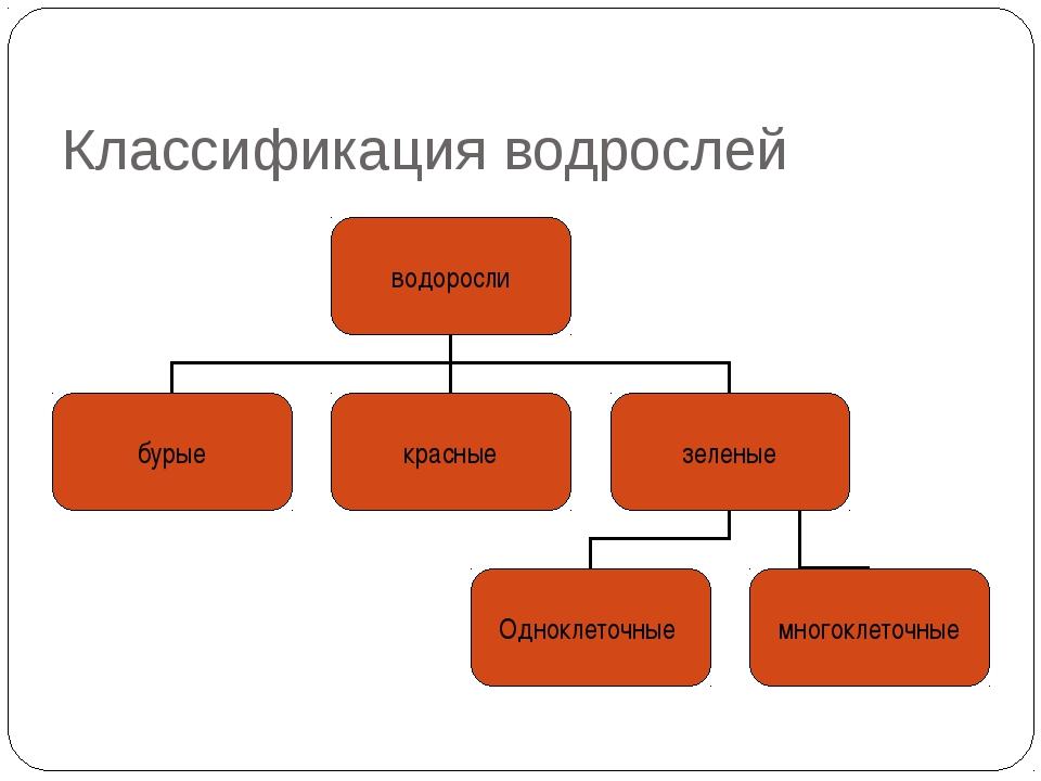 Классификация водрослей