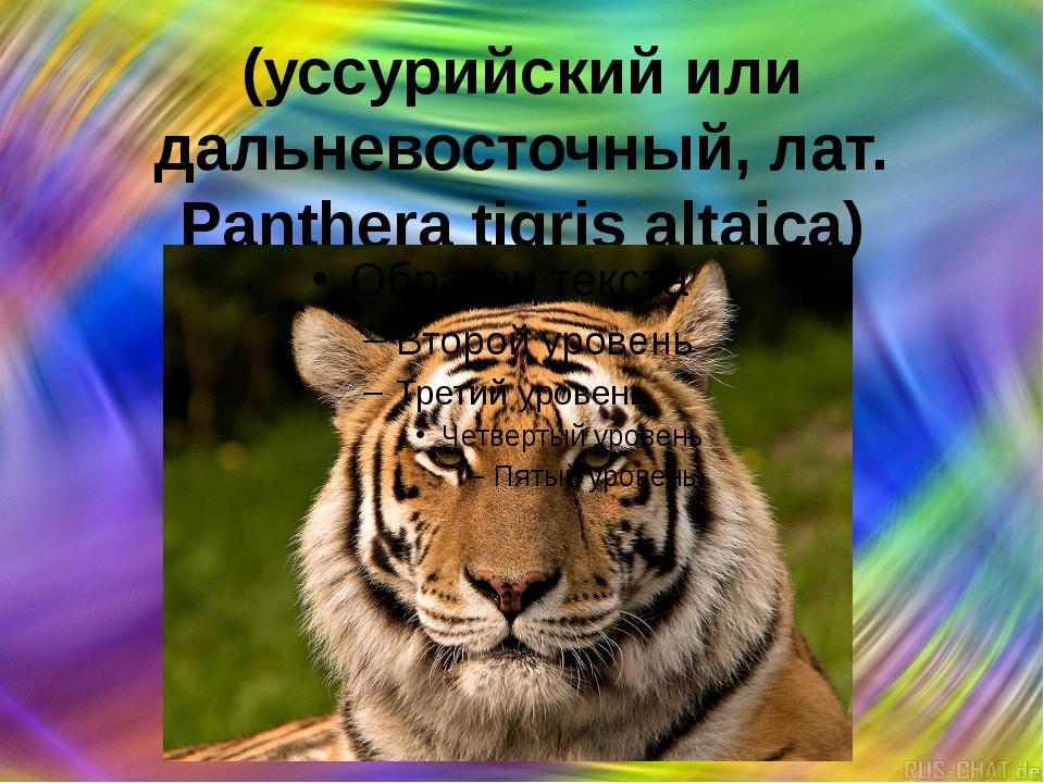 Аму́рский тигр (уссурийский или дальневосточный, лат. Panthera tigris altaica)