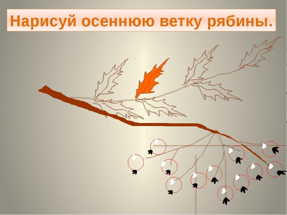 Нарисуй осеннюю ветку рябины.