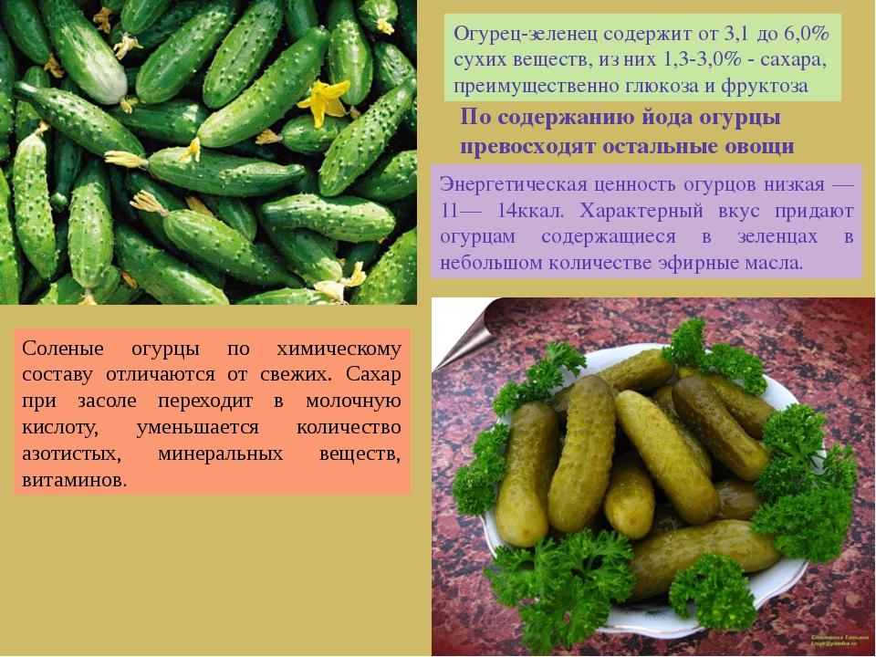 Огурец-зеленец содержит от 3,1 до 6,0% сухих веществ, из них 1,3-3,0% - сахар...