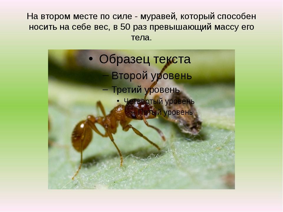 На втором месте по силе - муравей, который способен носить на себе вес, в 50...