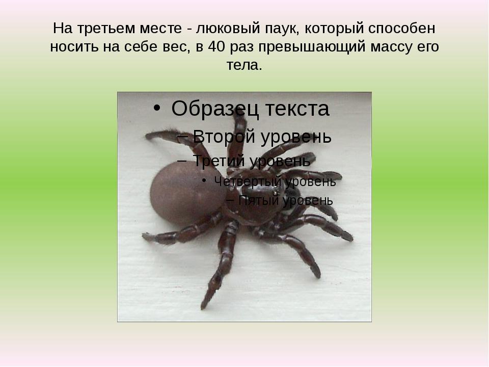 На третьем месте - люковый паук, который способен носить на себе вес, в 40 ра...