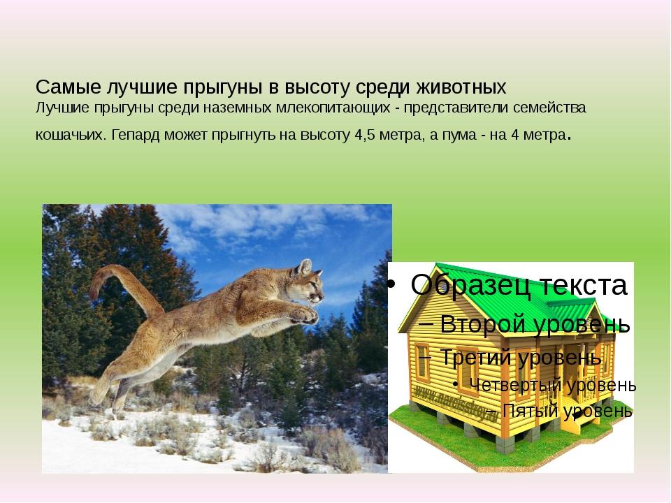 Самые лучшие прыгуны в высоту среди животных Лучшие прыгуны среди наземных м...