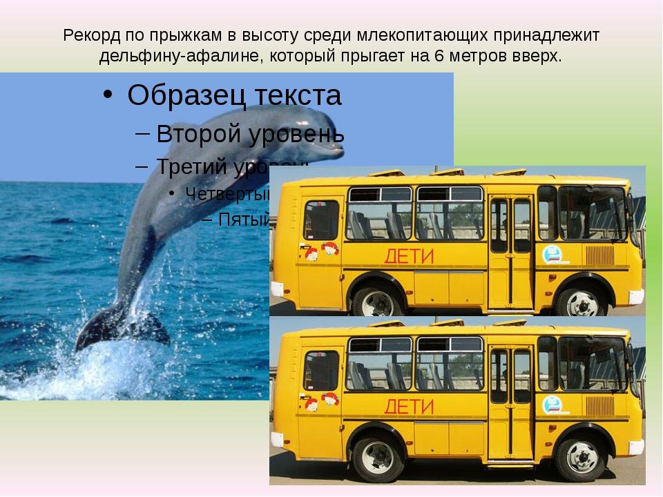 Рекорд по прыжкам в высоту среди млекопитающих принадлежит дельфину-афалине,...