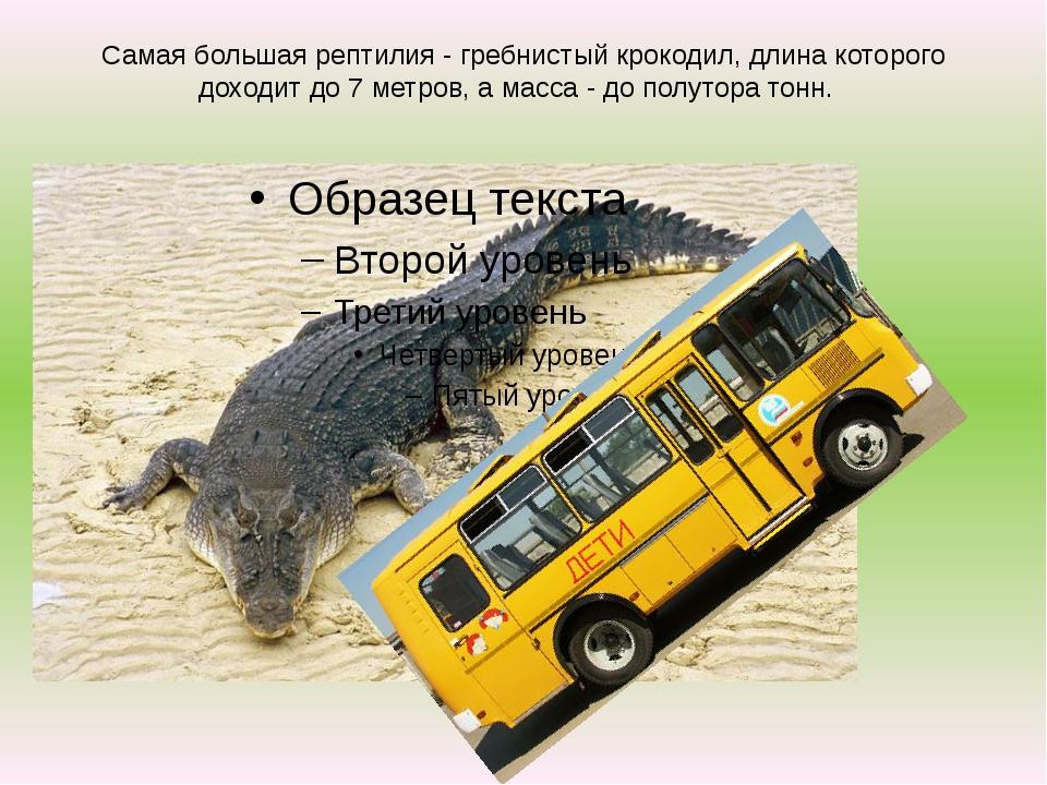 Самая большая рептилия - гребнистый крокодил, длина которого доходит до 7 мет...