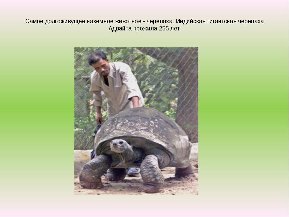 Самое долгоживущее наземное животное - черепаха. Индийская гигантская черепа...
