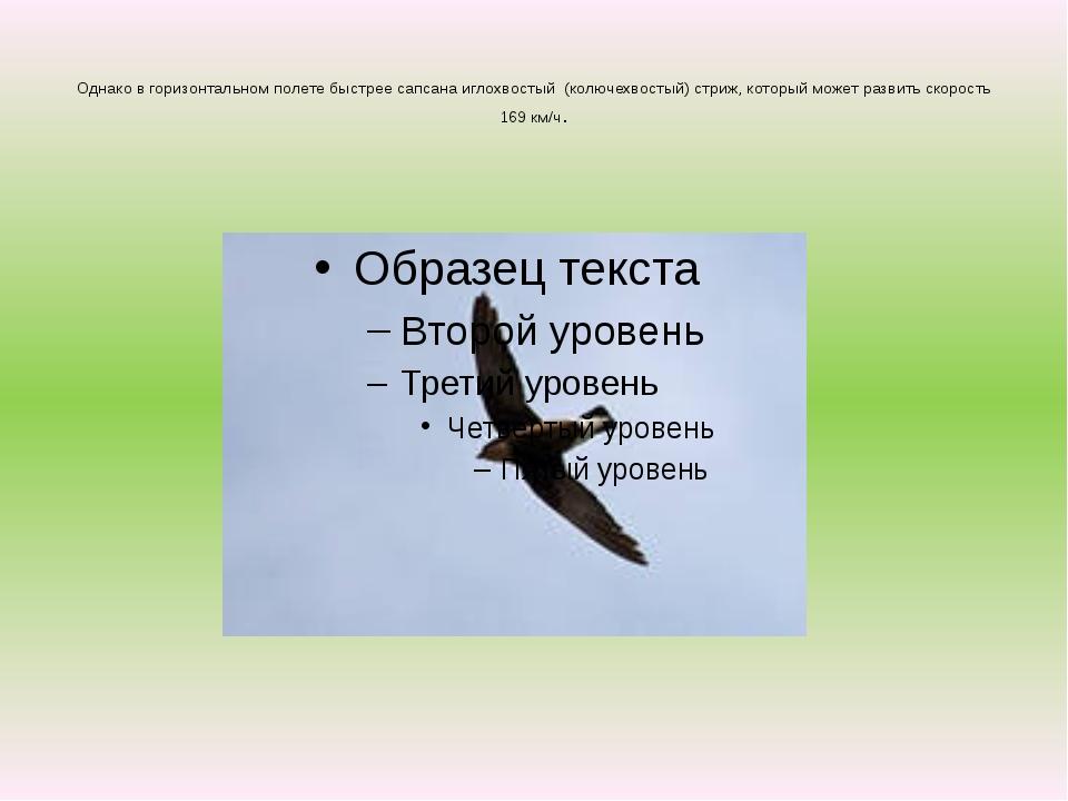 Однако в горизонтальном полете быстрее сапсана иглохвостый (колючехвостый) с...