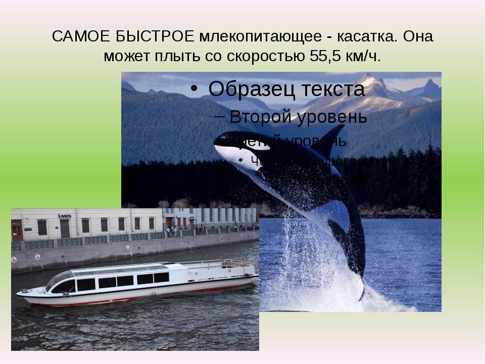 САМОЕ БЫСТРОЕ млекопитающее - касатка. Она может плыть со скоростью 55,5 км/ч.
