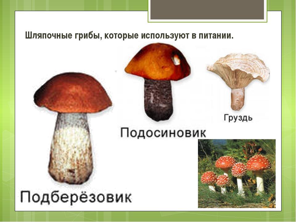 Шляпочные грибы, которые используют в питании.