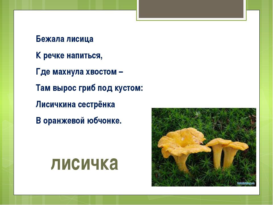 Бежала лисица К речке напиться, Где махнула хвостом – Там вырос гриб под куст...