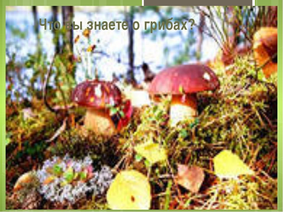 А отправимся мы сегодня с вами в лес, узнаем кое-что о грибах и познакомимся...