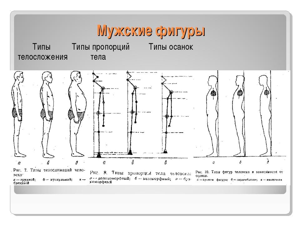 Мужские фигуры Типы Типы пропорций Типы осанок телосложения тела