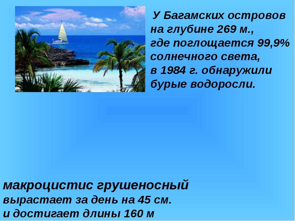 У Багамских островов на глубине 269 м., где поглощается 99,9% солнечного све...
