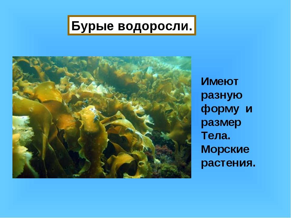 Бурые водоросли. Имеют разную форму и размер Тела. Морские растения.