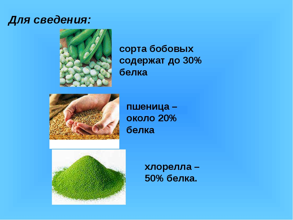 Для сведения: сорта бобовых содержат до 30% белка пшеница – около 20% белка х...