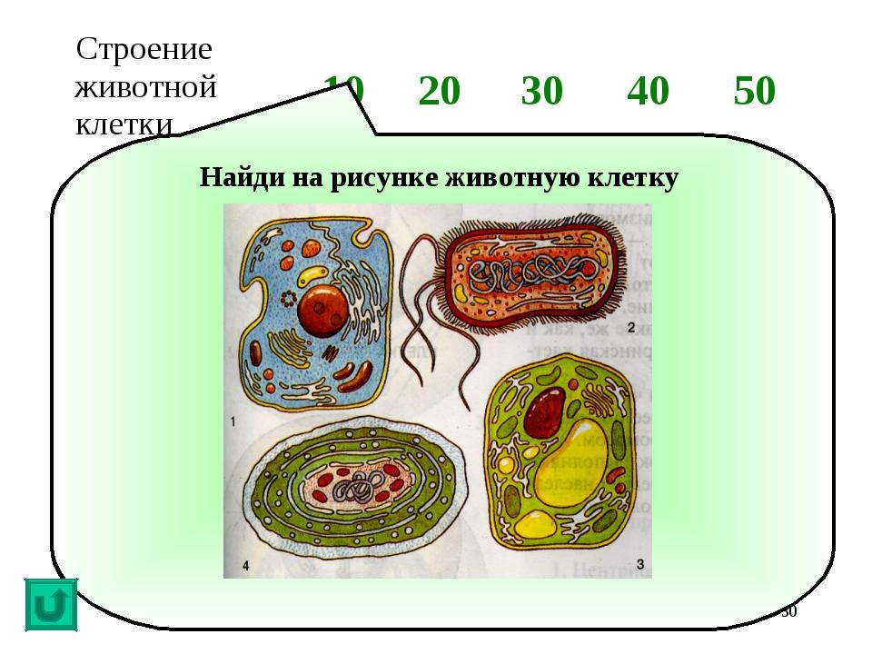 * Найди на рисунке животную клетку Строение животной клетки1020304050...