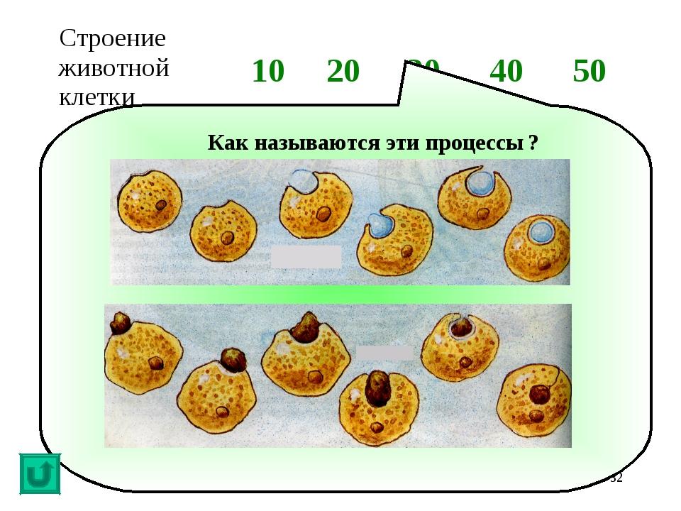 * Как называются эти процессы ? Строение животной клетки1020304050...
