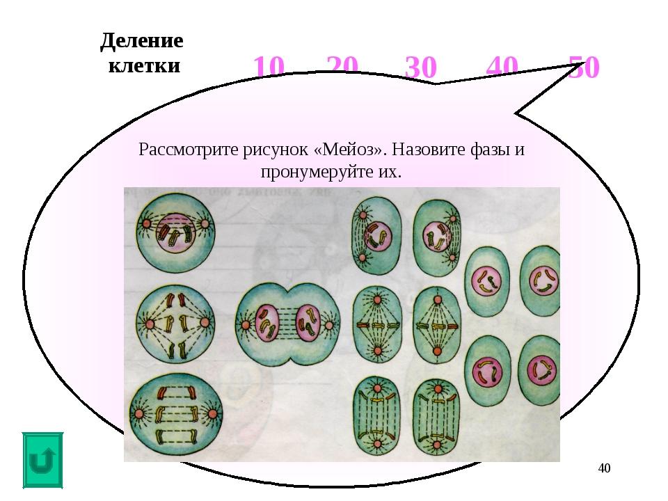 * Рассмотрите рисунок «Мейоз». Назовите фазы и пронумеруйте их. Деление клетк...