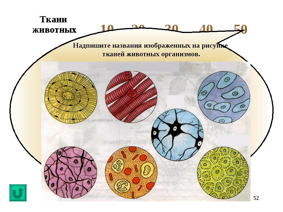 * Надпишите названия изображенных на рисунке тканей животных организмов. Ткан...