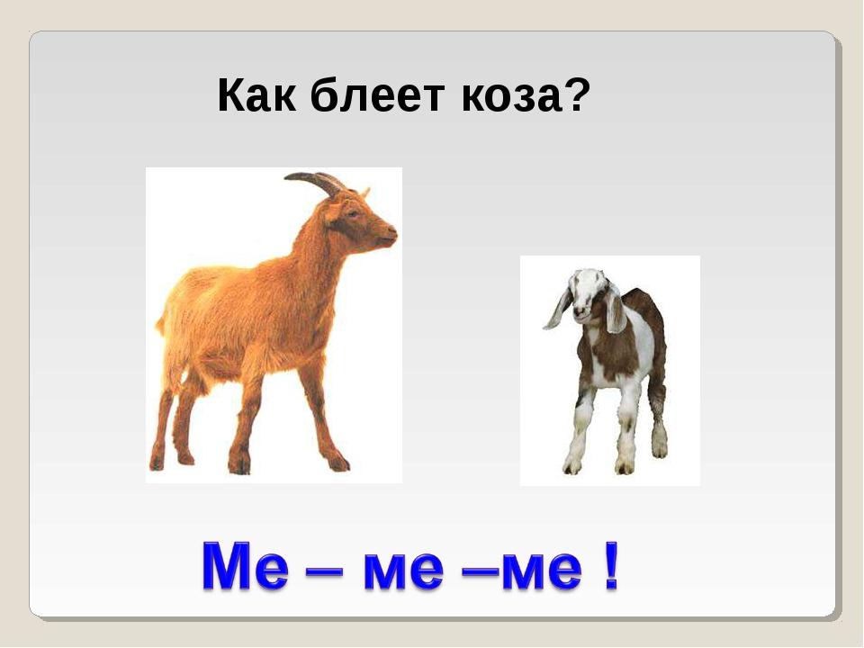Как блеет коза?