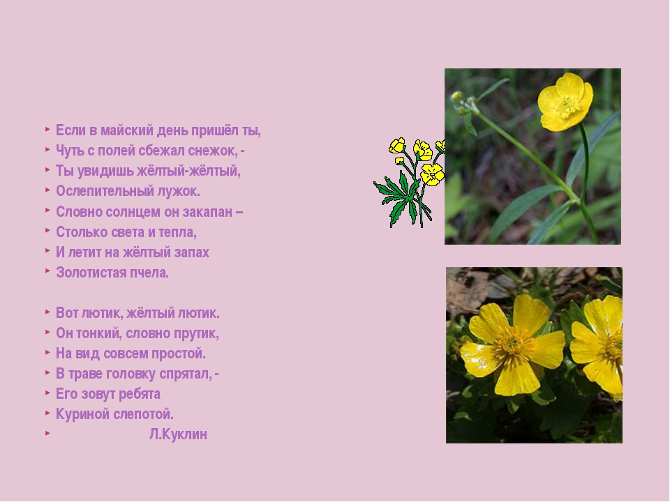 Если в майский день пришёл ты, Чуть с полей сбежал снежок, - Ты увидишь жёлты...