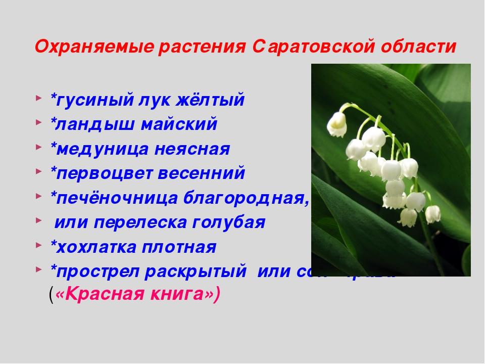 *гусиный лук жёлтый *ландыш майский *медуница неясная *первоцвет весенний *пе...