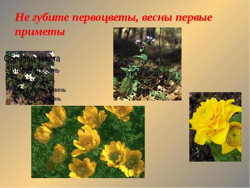 Не губите первоцветы, весны первые приметы