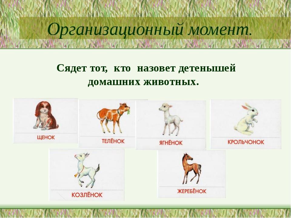 Организационный момент. Сядет тот, кто назовет детенышей домашних животных.