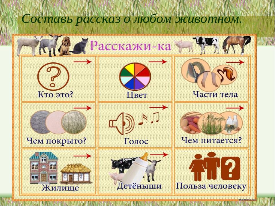 Составь рассказ о любом животном. http://logopsi.ucoz.com/_ph/96/196242607.jpg