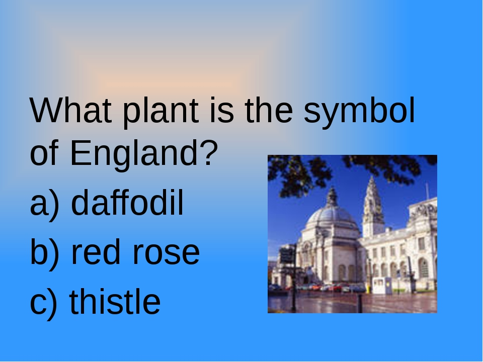 What plant is the symbol of England? a) daffodil b) red rose c) thistle