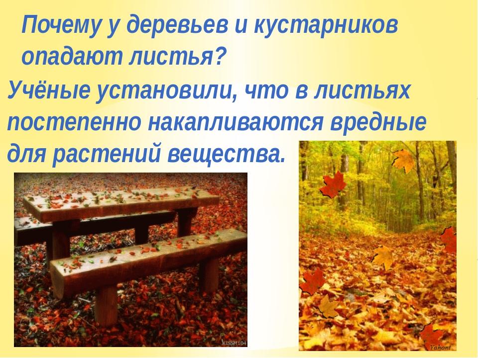 Почему у деревьев и кустарников опадают листья? Учёные установили, что в лист...
