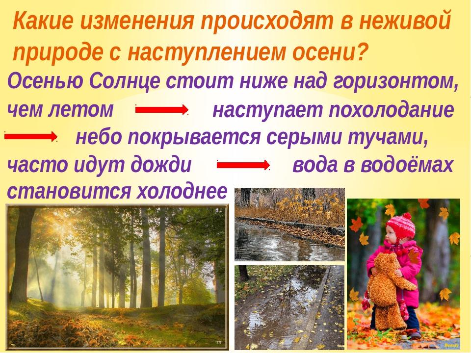 Какие изменения происходят в неживой природе с наступлением осени? Осенью Сол...