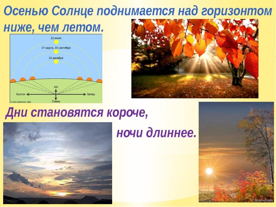 Осенью Солнце поднимается над горизонтом ниже, чем летом. Дни становятся коро...