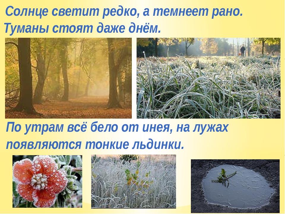 Солнце светит редко, а темнеет рано. Туманы стоят даже днём. По утрам всё бел...