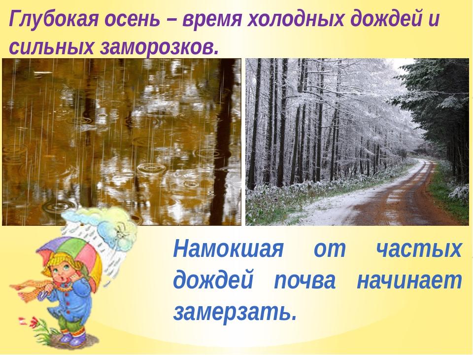 Глубокая осень – время холодных дождей и сильных заморозков. Намокшая от част...