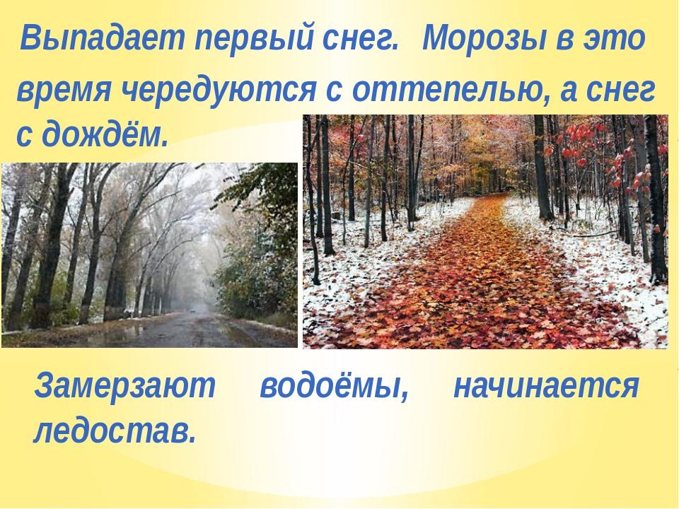 Выпадает первый снег. Морозы в это время чередуются с оттепелью, а снег с дож...