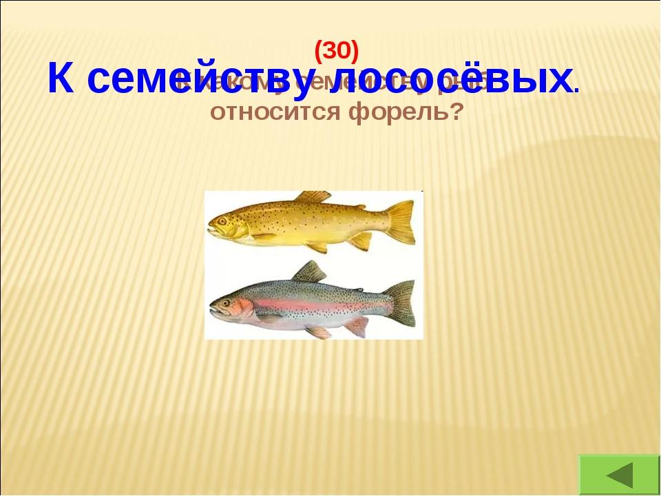 (30) К какому семейству рыб относится форель? К семейству лососёвых.