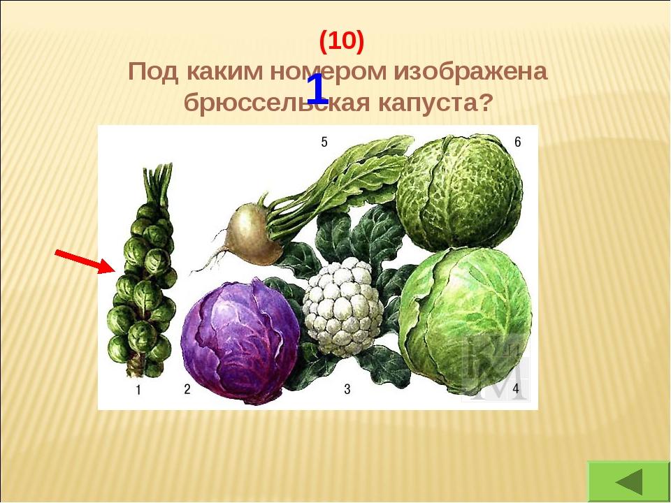 (10) Под каким номером изображена брюссельская капуста? 1