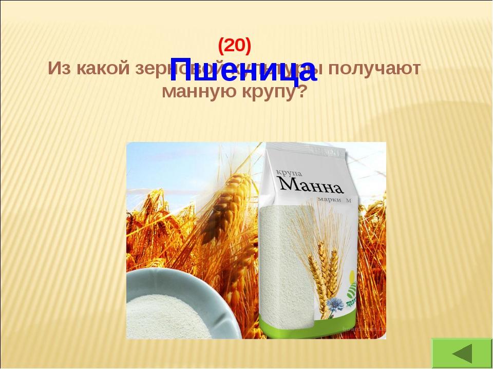 (20) Из какой зерновой культуры получают манную крупу? Пшеница